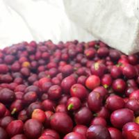 Organic Coffee Powder Medium