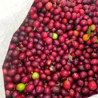 Non Organic Coffee Medium