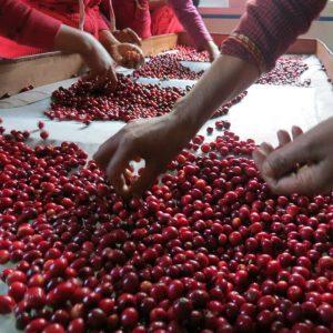 Non Organic Coffee Beans