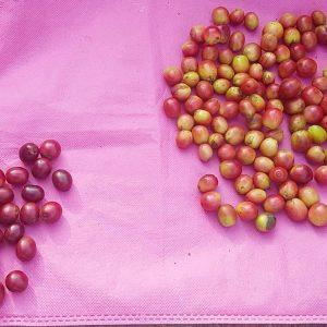 Organic Beans Coffee Normal