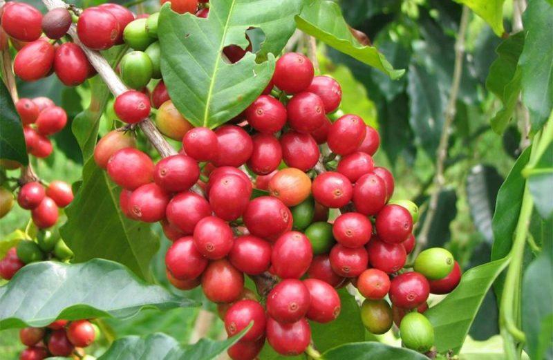 Non Organic Beans Medium